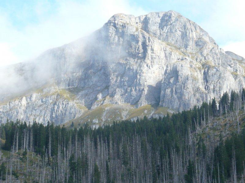 Aeugstenwald und Schilt